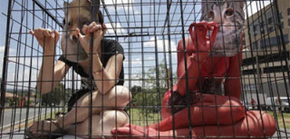 """FIRMÁ POR EL """"NO A LA VENTA DE ANIMALES EN LA CIUDAD AUTÓNOMA"""""""