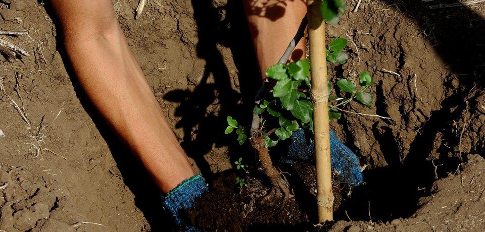 cultiva12
