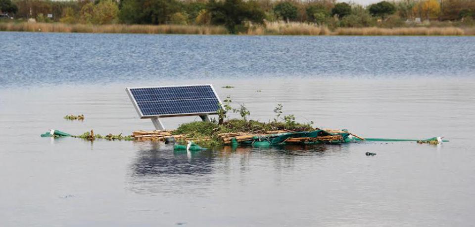 LUGANO: EN SU LAGO DESCUBREN PLANTA CON PROPIEDADES DESCONTAMINANTES