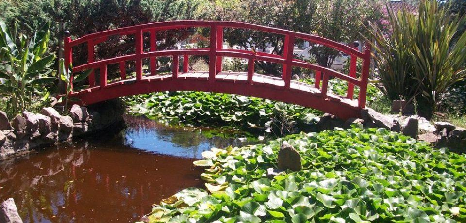 jardin_botanico_en_las_flores