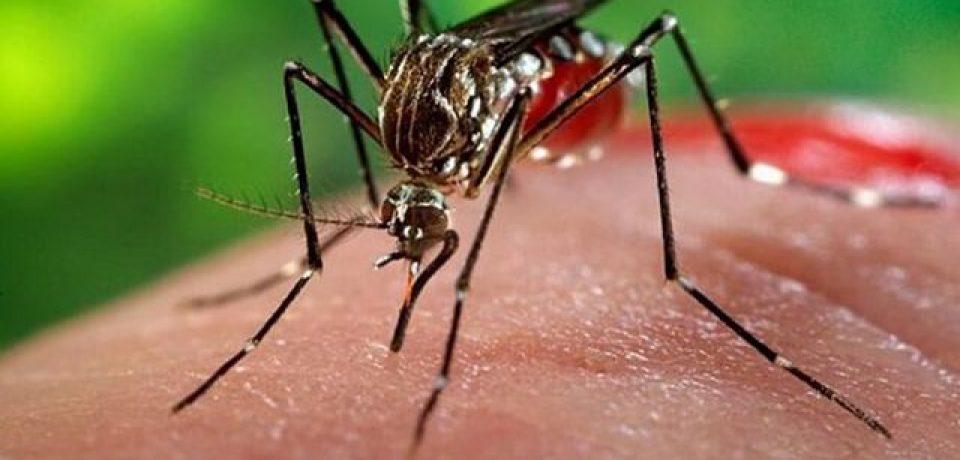 """Schweigman: """"El dengue es algo sencillo de resolver pero no hay preocupación suficiente"""""""