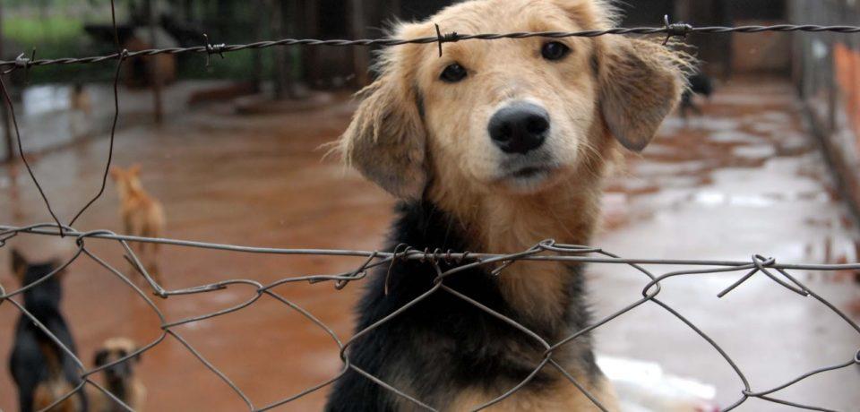 Colecta para ayudar a un refugio de animales